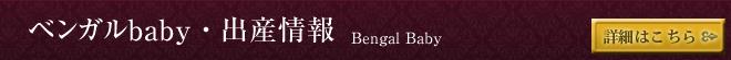 ベンガルbaby・出産情報
