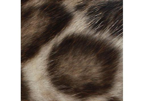 ベンガル猫の模様 ドーナツ型ロゼット